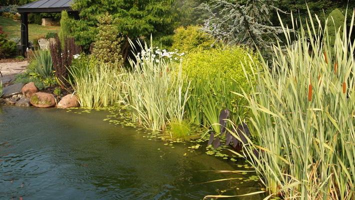 Vodné rastliny pre koi jazierka
